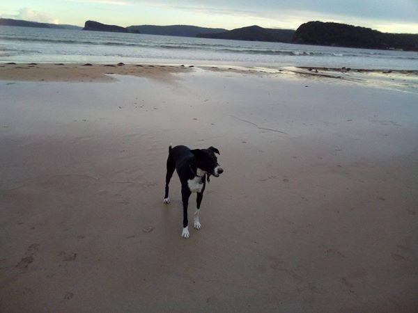 Zac at the beach