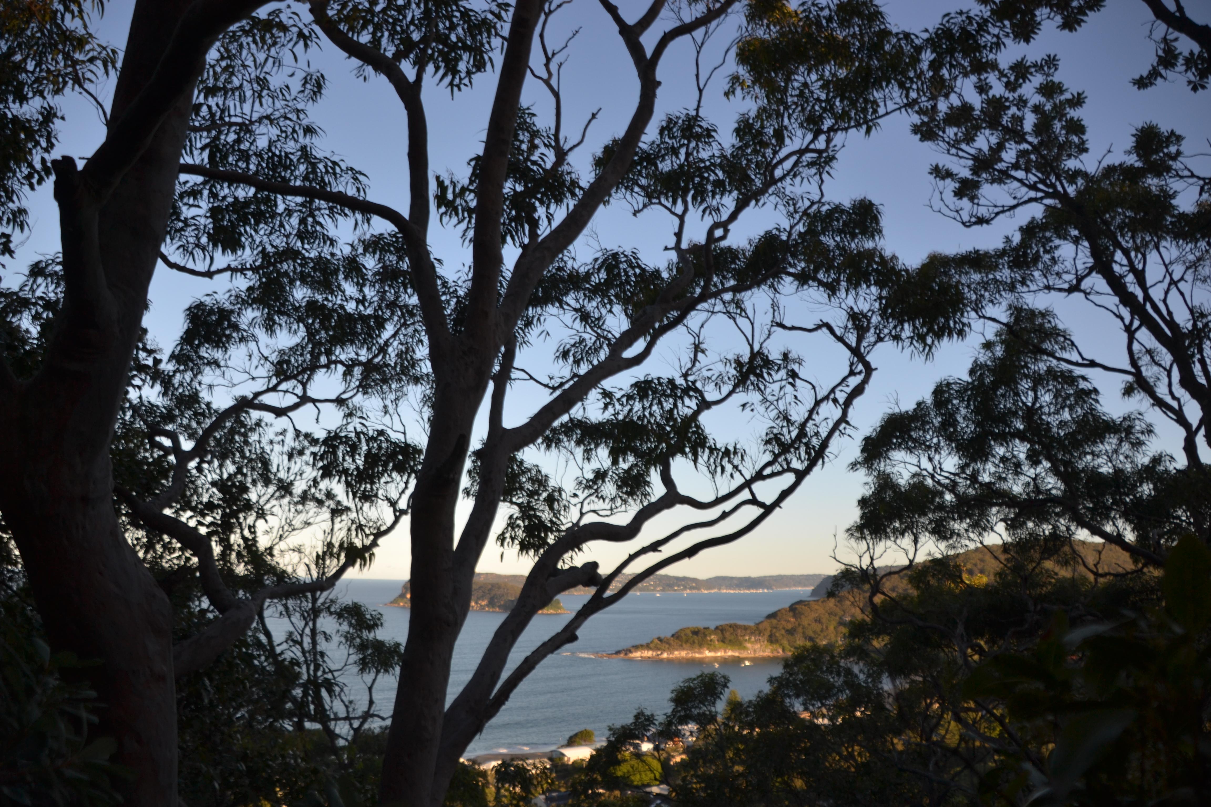 Mt Ettalong Lookout through trees