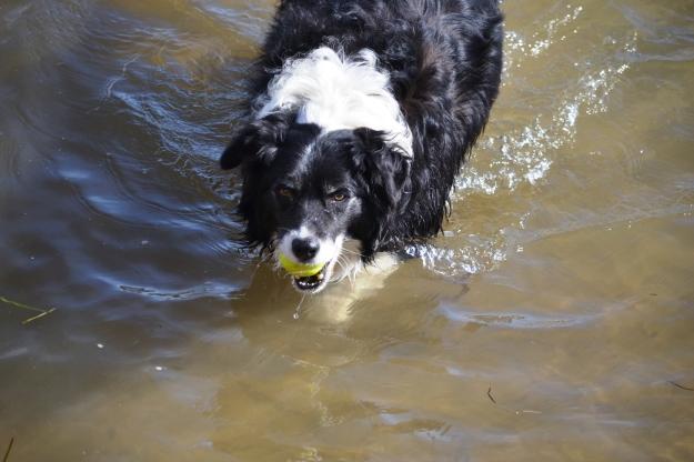 Wet Bilbo