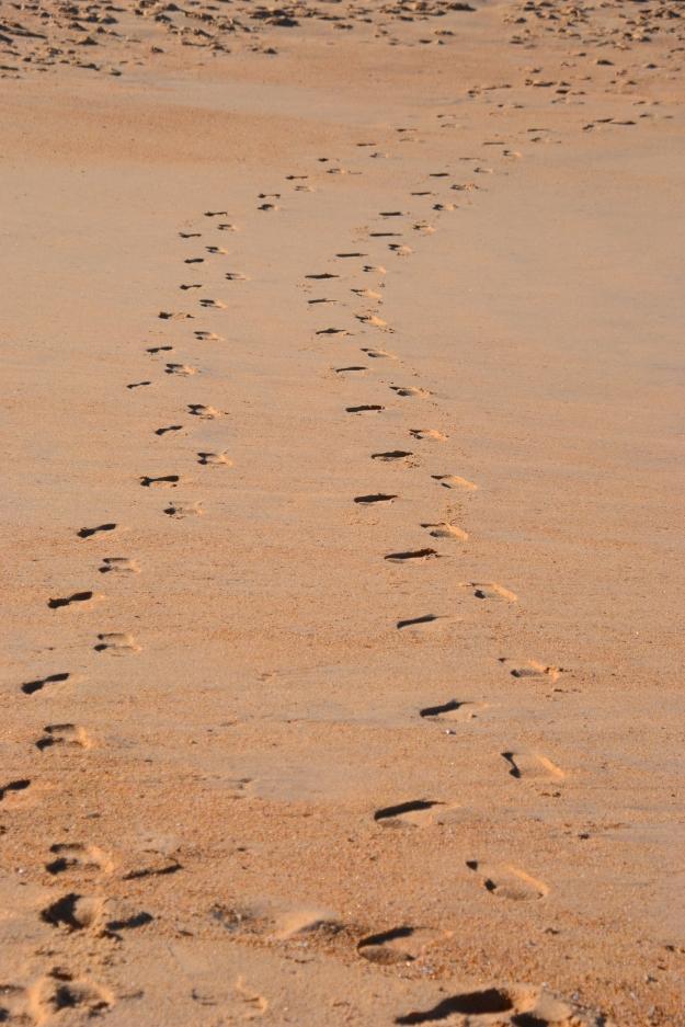 Footprints Pearl Beach