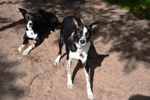 Zac & Rosie